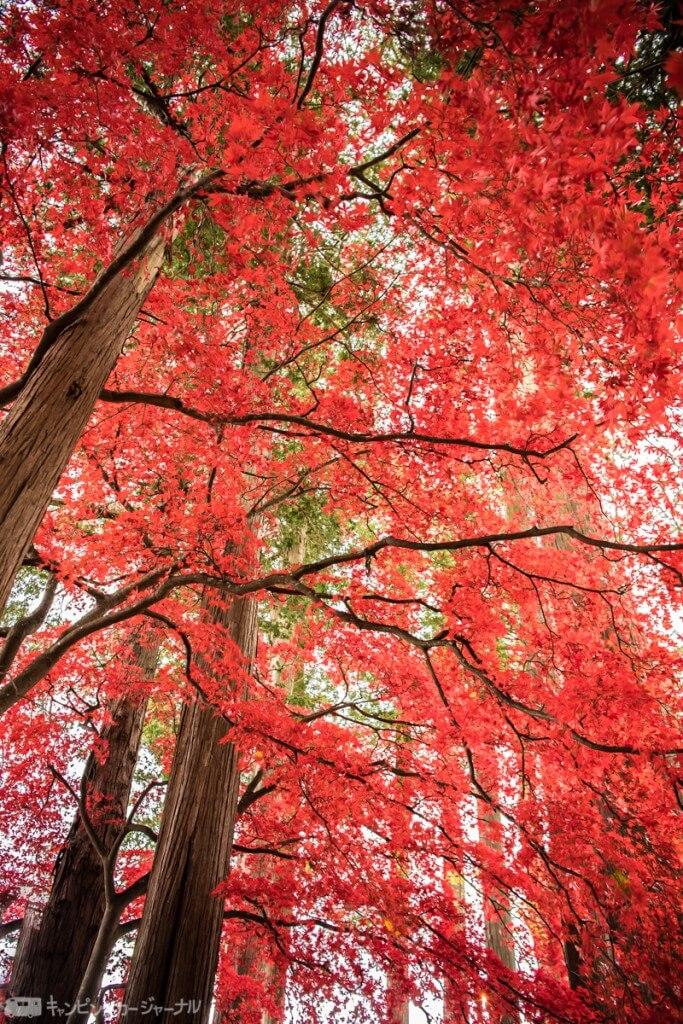 お寺入り口から紅葉の道が続きます
