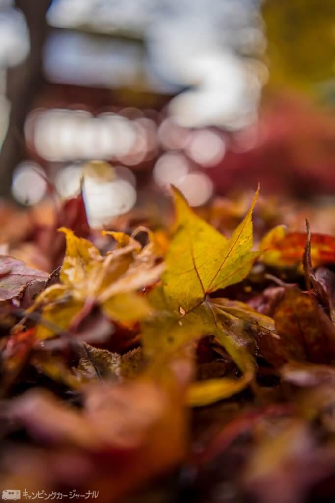 落ち葉の絨毯です🍁美しい