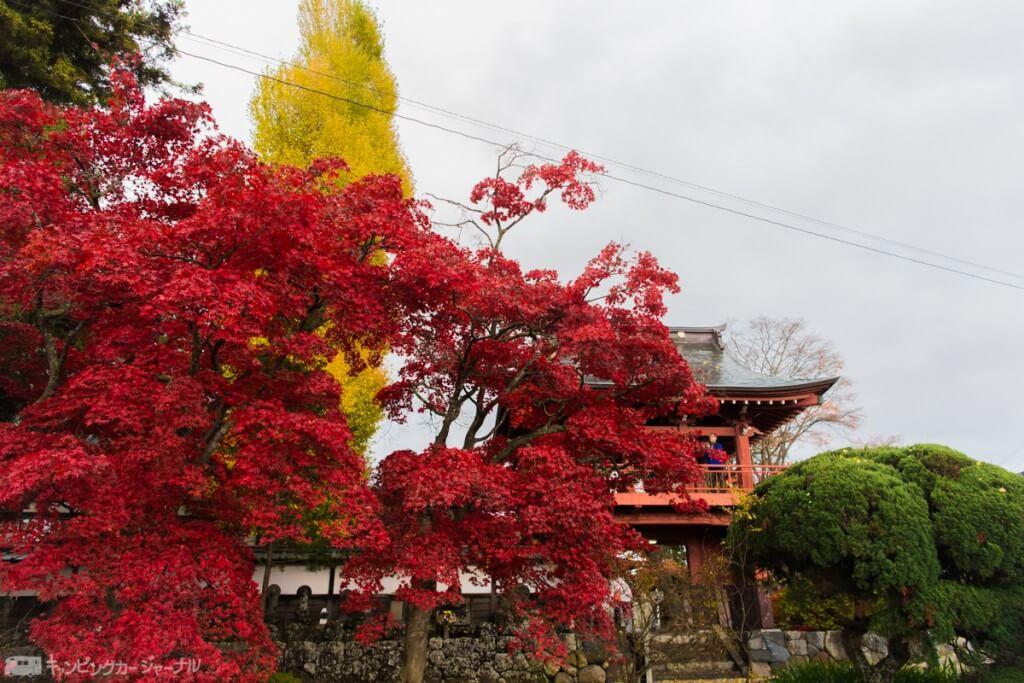 こんなに赤い紅葉を今まで生きてきて見たことがあるだろうか。いや無い!