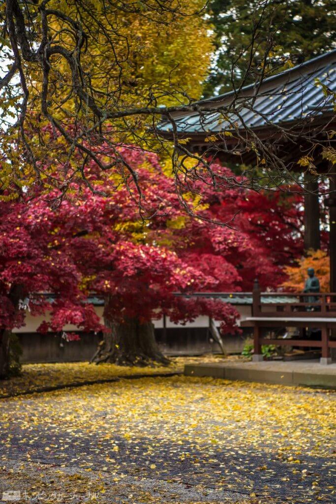門をくぐっても紅葉はまだまだ🍁隣のイチョウの木の黄色も美しいです