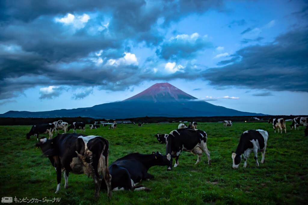 朝霧高原の牧場から見える富士山