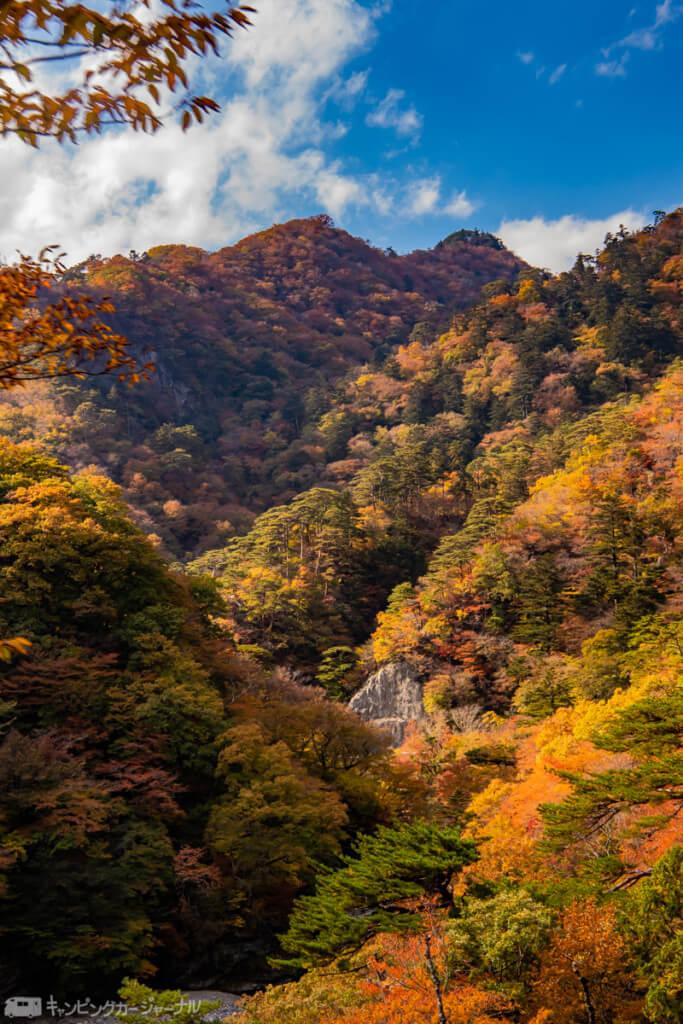 日本には木がたくさんありますがすべて法律で規制されています