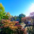 【絶景】紅葉に包まれたオートキャンプ場 那須高原オートキャンプ場
