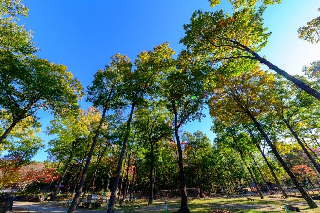 木立にかこまれた那須高原オートキャンプ場