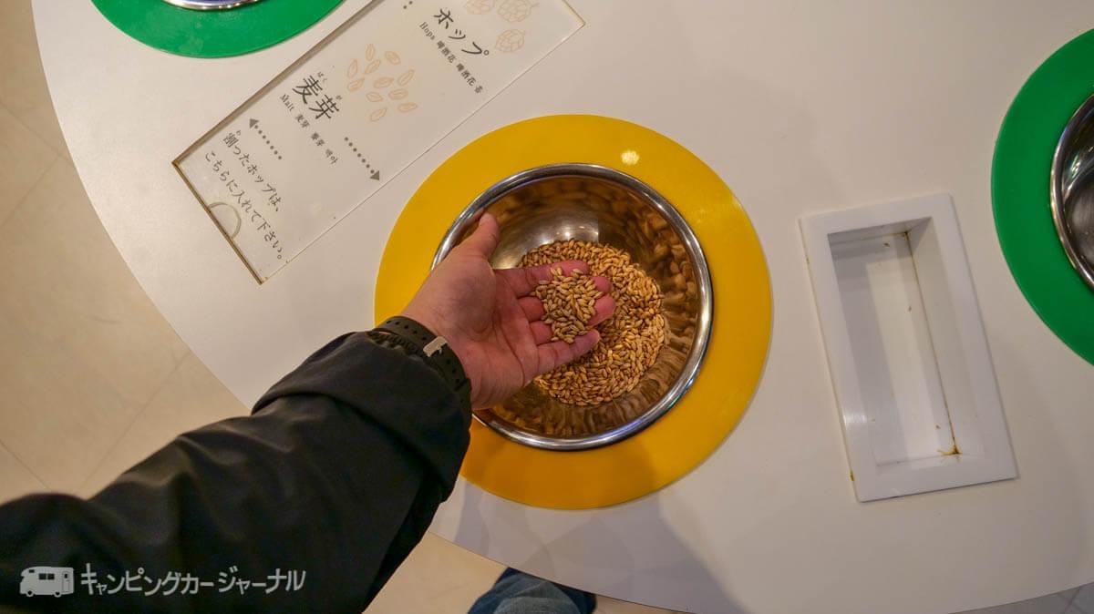 キリンビール横浜工場の麦芽を食べる